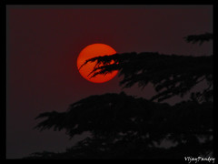 When the Werewolf returns .... (VIjay Pandey) Tags: red vijay sky sun moon india phoenix werewolf pine flesh night shimla wolf eerie nomad himalaya pandey werewolves anawesomeshot diamondclassphotographer flickrdiamond vijaypandey