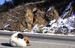 Lost II (Jorgelixious) Tags: dog snow ice fuji nieve finepix perros s5600