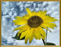 It's About the Sky (Child of the King Photography) Tags: flower watcher impressedbeauty diamondclassphotographer flickrdiamond ysplix thatsclassy