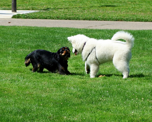 Dog Play 2