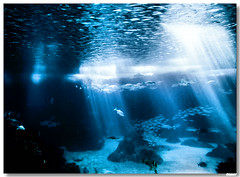 20070706_Lisboa_Oceanario (vmribeiro.net) Tags: portugal geotagged shots lisboa lisbon z outstanding oceanário wonderworld outstandingshots anawesomeshot 301ininterestingnesson20070829 geo:lat=38763545 geo:lon=9093739