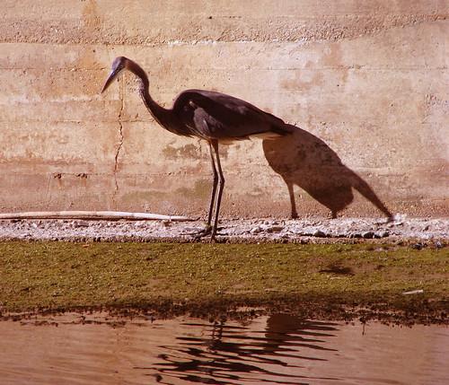 052 bird, copy