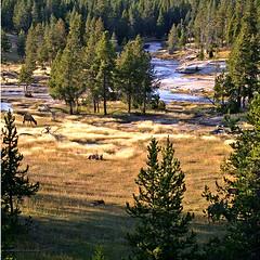 now (*Silvie*) Tags: yellowstone part2 roadtrip2006