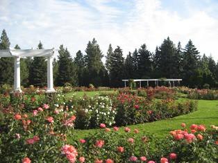 Spokane_2007_Roses