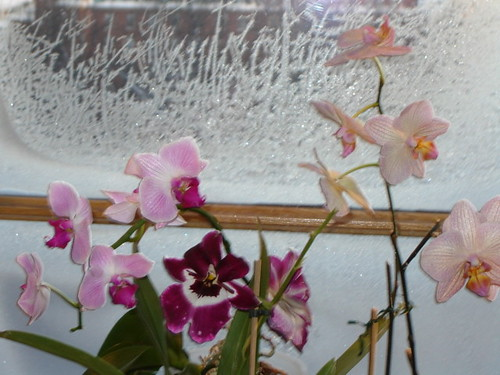 orchids and ice flowers by Anna Amnell
