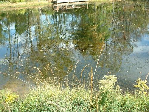 Slate Run Wetlands