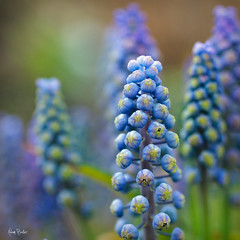 psychedelic blooms ([Adam Baker]) Tags: life new flower macro nature canon square spring blossom bokeh fresh growth bloom cornell psychedelic tentacle plantations adambaker 50mm28macro 5dmarkii petob