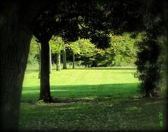 Darkness to Light - A Change is Gonna Come.... (Jan 130) Tags: trees walk corridor birminghamuk samcooke oneofmyfavouritesongs achangeisgonnacome pypehayespark neargarden walkwithzak qualitygold shadeintosun