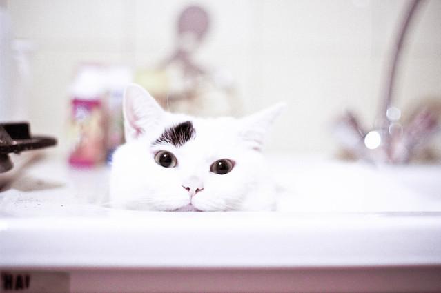 Bath mood ?