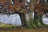 Pagoak (jonlp) Tags: tree fall nature landscape natura navarre zuhaitza pagoa nafarroa udazkena paisajea