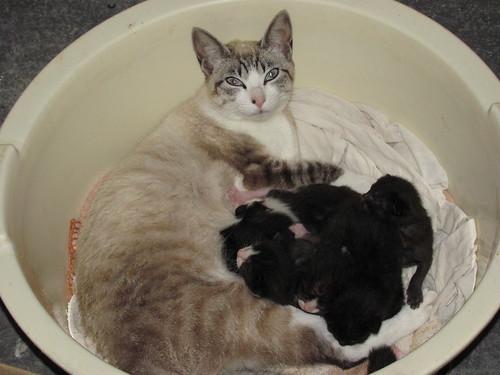 Ket Nit e seus Filhotinhos