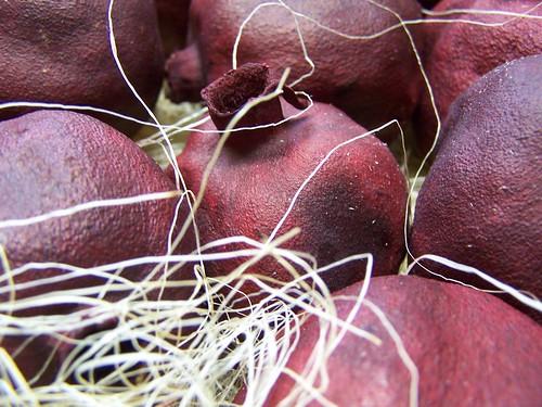 pomegranate; dried