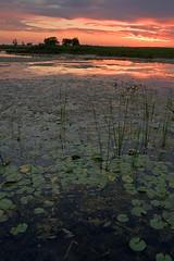Crooked Slough Sunset 3, (7/2/07) (baldwinm16) Tags: sunset illinois forrest prairie preserve springbrook springbrookprairie