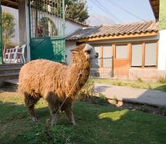 Перуанське в'язання