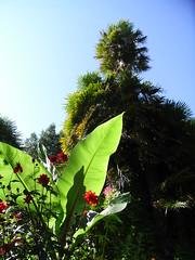 Leafs (maddavethorp) Tags: gardens dorset subtropical abbotsbury