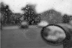 Rainy Days (ezwal) Tags: usa 28mm nj princeton diafine canon1v ei100 28mm18 canonef28mmf18usm gekkomw100 to:site=protozoic
