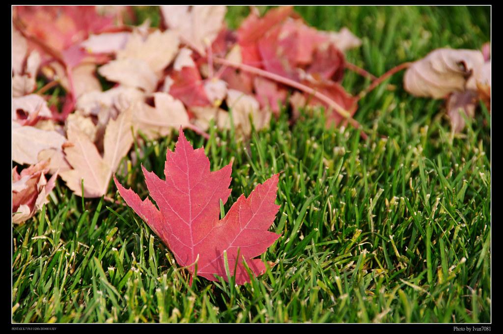 加拿大遊學日記10