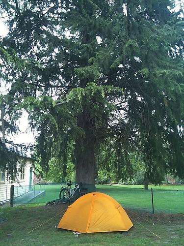 大きな○○の木の下で