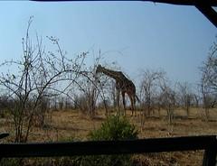 2787 (satinam2) Tags: africa botswana namibia himba