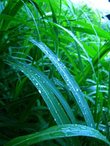 web grass, RBG