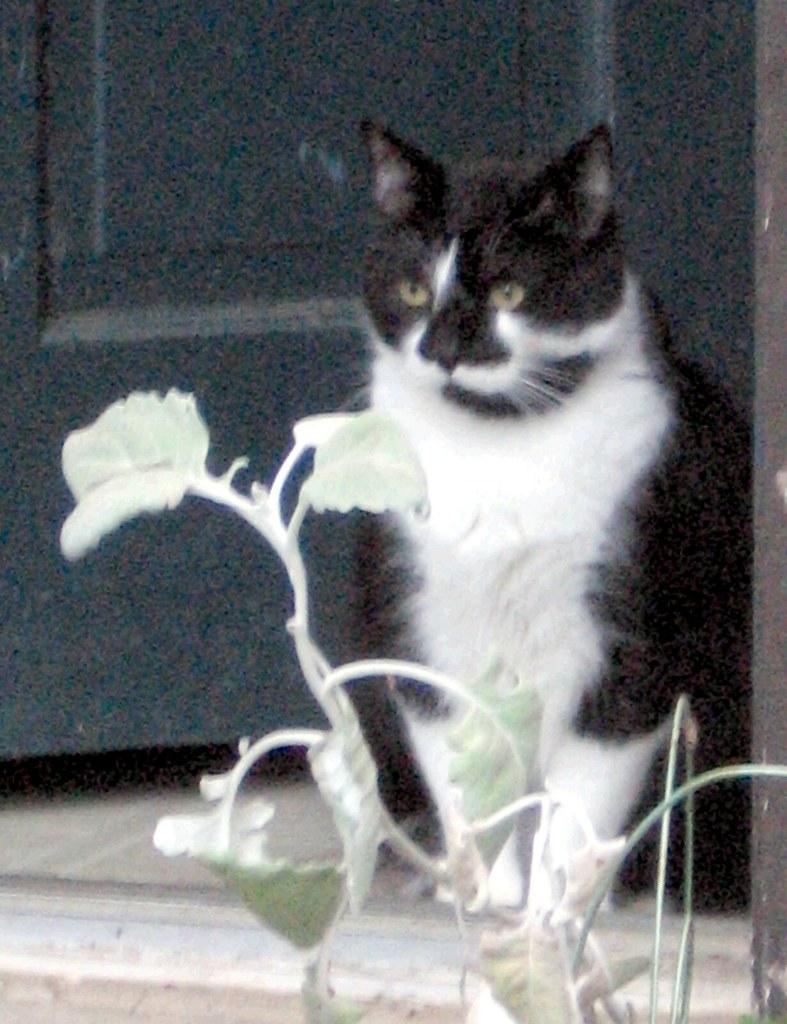 Montana the Cat in the Doorway