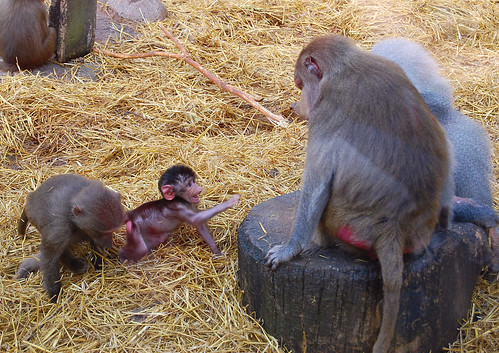 Monkeys at Skansen