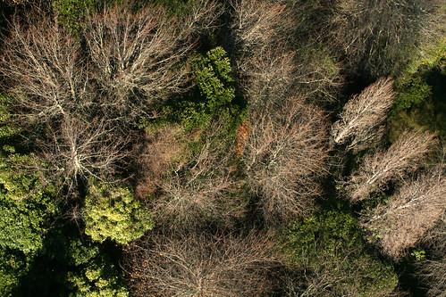 Cemetery Trees
