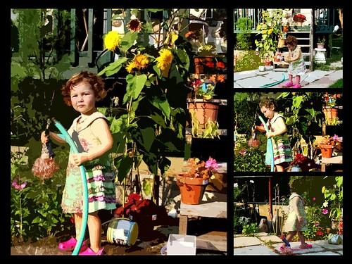 Lily au soleil