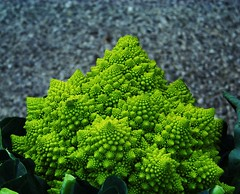 Otherworldly Romanesque Broccoli (Renee Rendler-Kaplan) Tags: vegetable green pointed pointy chicagoist reneerendlerkaplan october 2010 evanston evanstonfarmersmarket evanstonillinois wbez gapersblock gbrearview market forsale otherworldly kodak kodakeasyshare romanesque cauliflower broccoli combination food fractal fibonaccispiral fibonaccisequence spirals cones nature mothernature hybrid fun