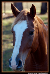 Cavalo ! (crenan) Tags: santa horse me rio d50 grande interesting nikon do calendar photos maria fast explore santamaria cavalos score cavallo cavalo sul blueribbonwinner ufsm d80 scoremefast câmeradeourobrasil crenan grupo1a10brasil visãofotográfica carlosrenanpiressantos