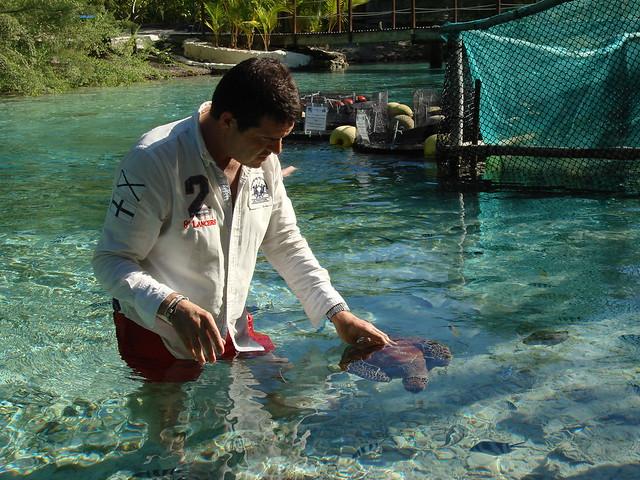 Me feeding a turtle (Motu Tape - Le Meridien Bora Bora)