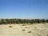Israeli kibbutz