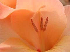 flower (jk10976) Tags: flowers nepal flower bravo asia soe jk blueribbonwinner supershot flowerotica flickrsbest abigfave shieldofexcellence anawesomeshot colorphotoaward impressedbeauty superbmasterpiece firsttheearth jk10976 kathamanu jkjk976