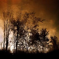 Rainy day on the soulmates! (Denis Collette...!!!) Tags: canada reflection tree art rain painting photography photo bravo photographie spirit pluie rivire peinture reflet photograph qubec arbre soulmates photographe me deniscollette wildriver messoeurs world100f