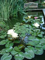 pondflowerz07004
