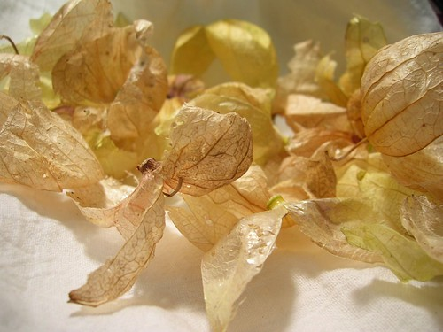 Papery Husks of Tomatillos