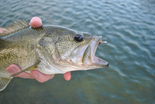 morefishing 011