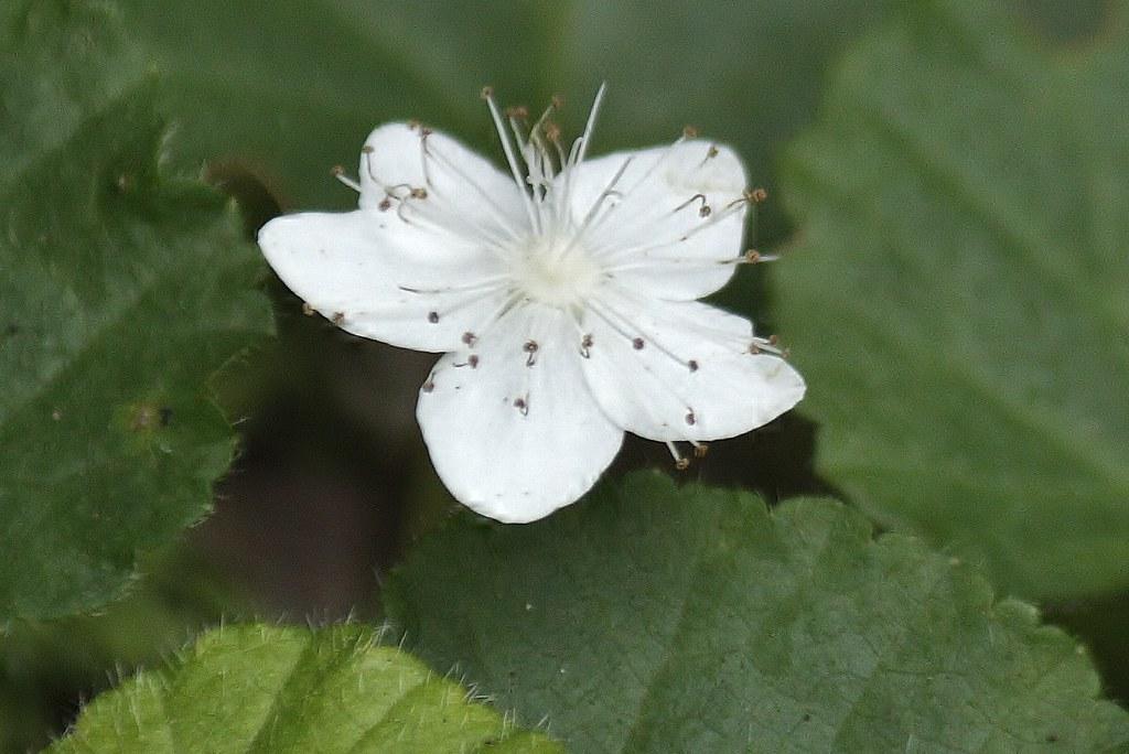 Dewdrop (4)