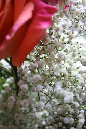baby's breath — June 26