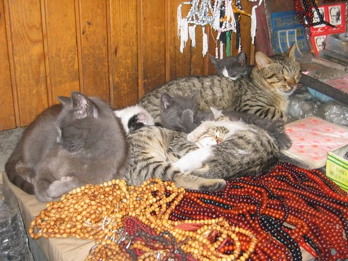 A bazárban a pulton macskát is találunk. Nem eladó, azok ott voltak már a bazár előtt is.