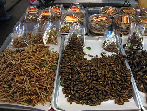 Snacky bugs!