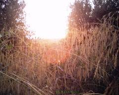 Sunset Milli غروب حاسي ميلي