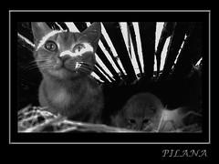 mother (PILANA) Tags: bw cats art animal cat olympus olympusc5060 c5060 pilana bestofcats enjoyphotographs renatomajeti olympusc5060widezoom