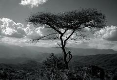 Acacia (djemde) Tags: africa tree tanzania acacia bej theperfectphotographer