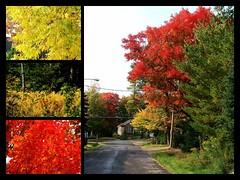 Zestes d'automne