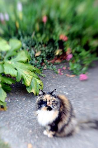 picasso kickin' it in the garden