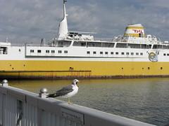 boredom (Tacchan) Tags: ship aomori strait    seamew