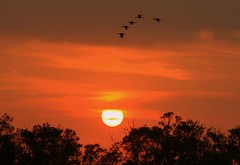 Come Fly With Me (edwardleger) Tags: sunset orange sun bird parish outside louisiana outdoor edward picnik acadia leger acadiana goldenmix mywinners wonderfulworldmix estherwood edwardleger edwardnleger