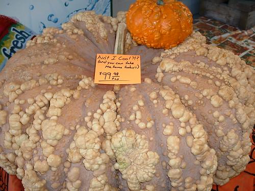 $100 Pumpkin!