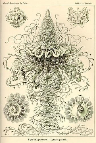 HaeckelMonster1